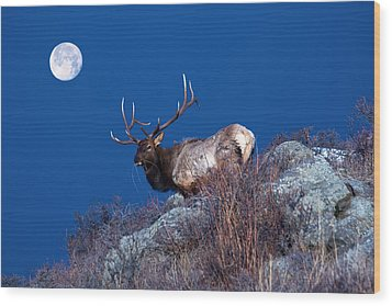 Wild Moon Wood Print by Shane Bechler