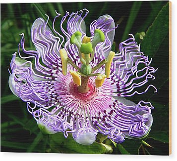 Wild Passion Flower Wood Print