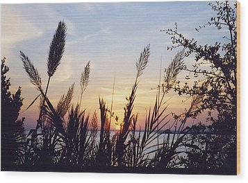 Wood Print featuring the photograph Wild Plumes by Michele Kaiser