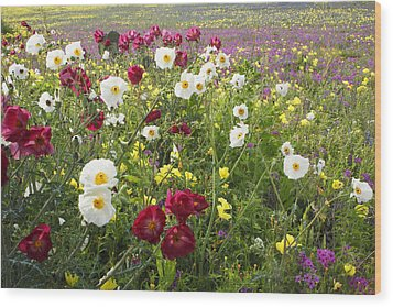 Wild Poppies South Texas Wood Print