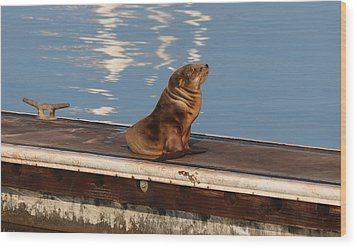 Wood Print featuring the photograph Wild Pup Sun Bathing by Christy Pooschke