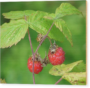 Wild Raspberries Wood Print