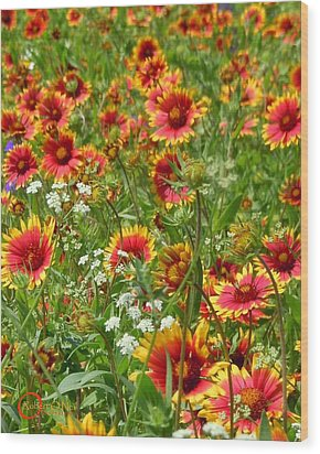 Wood Print featuring the photograph Wild Red Daisies #2 by Robert ONeil