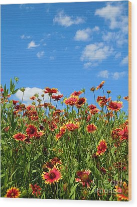 Wood Print featuring the photograph Wild Red Daisies #5 by Robert ONeil