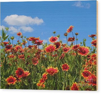 Wood Print featuring the photograph Wild Red Daisies #7 by Robert ONeil