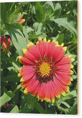 Wood Print featuring the photograph Wild Red Daisy #2 by Robert ONeil