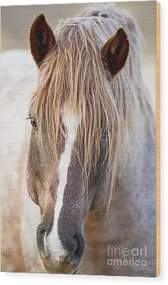 Wild Red Roan Stallion Comes Close Wood Print by Carol Walker
