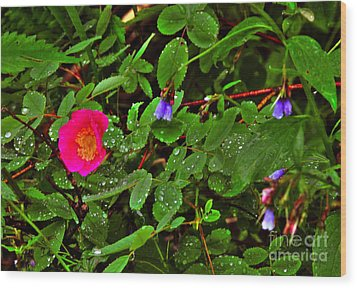 Wild Rose And Bluebell Wood Print by Sam Rosen