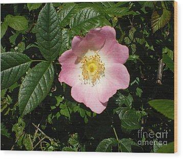 Wild Rose Wood Print by Ann Fellows