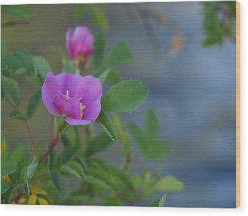 Wild Rose Wood Print by Jenessa Rahn
