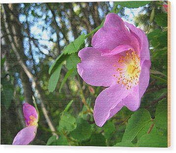Wild Rose Wood Print by Shirley Sirois