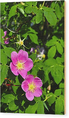Wood Print featuring the photograph Wild Roses by Cathy Mahnke