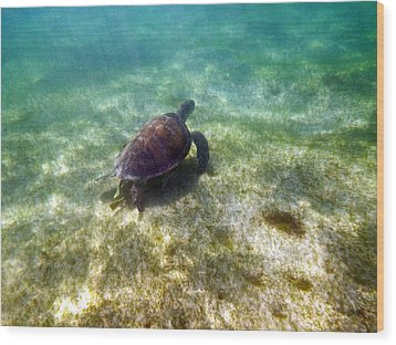 Wood Print featuring the photograph Wild Sea Turtle Underwater by Eti Reid