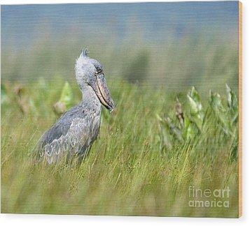 Wood Print featuring the photograph Wild Shoebill Balaeniceps Rex  by Liz Leyden