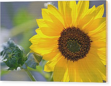 Wood Print featuring the photograph Wild Sunflower by Nadalyn Larsen