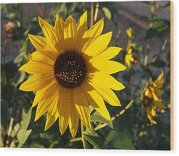 Wild Sunflower Wood Print by Nadja Rider