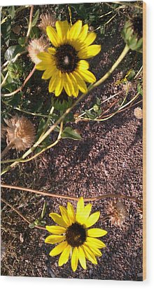 Wood Print featuring the photograph Wild Sunflowers by Fortunate Findings Shirley Dickerson