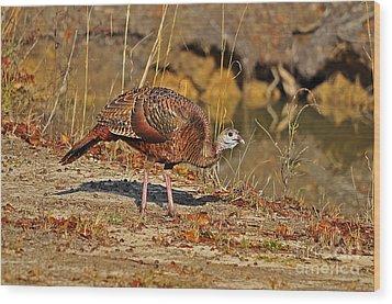 Wild Turkey Wood Print by Al Powell Photography USA