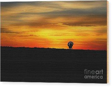 Wild Turkey At Sunset Wood Print by Dan Friend