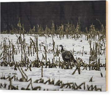 Wild Turkey In The Corn Wood Print by Thomas Young