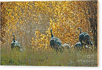 Wild Turkeys And Fall Colors Wood Print by Robert Bales