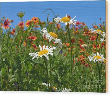Wood Print featuring the photograph Wild White Daisies #1 by Robert ONeil