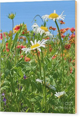 Wood Print featuring the photograph Wild White Daisies #2 by Robert ONeil