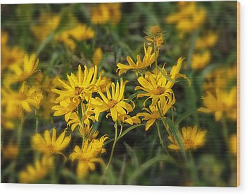 Wood Print featuring the photograph Wild Yellow Daisies by Susan D Moody