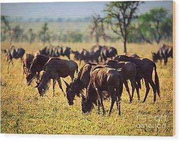 Wildebeests Herd. Gnu On African Savanna Wood Print by Michal Bednarek