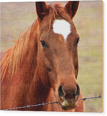 Wildfire - Equine Portrait Wood Print