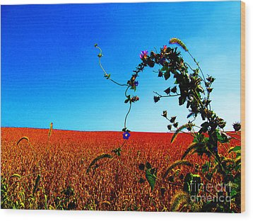 Wildflower And Soy Wood Print by Tina M Wenger