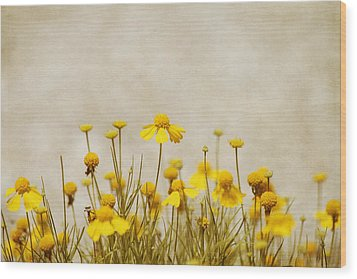 Wildflower Daisies Wood Print by Kim Hojnacki