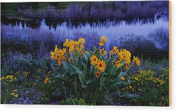 Wildflower Reflection Wood Print by Dan Sproul
