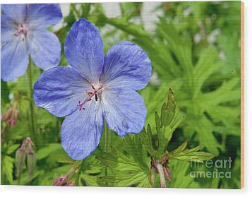 Wood Print featuring the photograph Wildflower by Rod Wiens