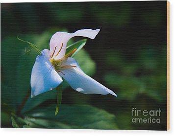Wildflower Surprise Wood Print by Jennifer Apffel