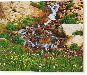 Wildflower Waterfall Wood Print by Tranquil Light  Photography