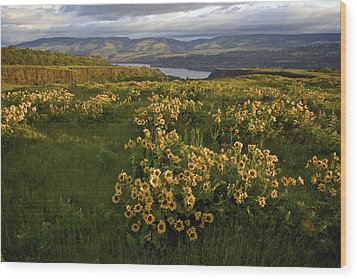 Wildflowers At Dawn On The Columbia Gorge Wood Print