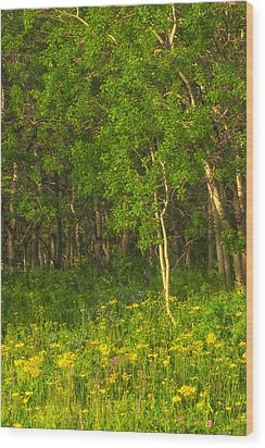 Wood Print featuring the photograph Wildflowers Glacier National Park Montana by Ram Vasudev