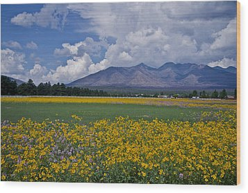 Wildflowers In Flag 9611 Wood Print