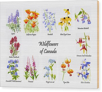 Wildflowers Of Canada Poster Wood Print by Sharon Freeman