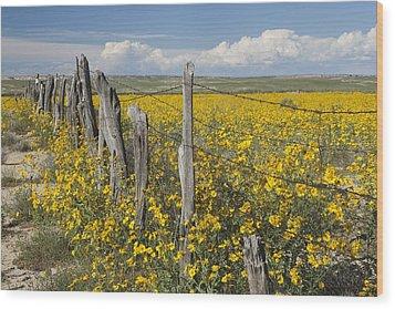 Wildflowers Surround Rustic Barb Wire Wood Print by David Ponton