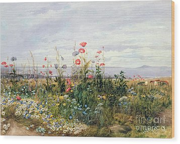 Wildflowers With A View Of Dublin Dunleary Wood Print by A Nicholl
