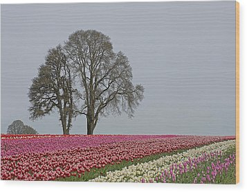 Willamette Valley Tulips Wood Print