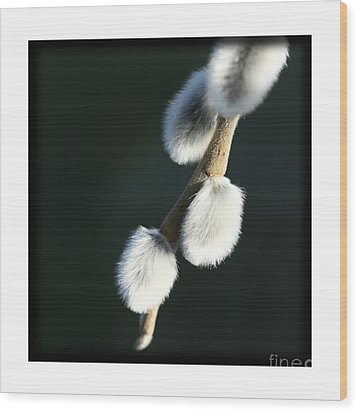 Wood Print featuring the photograph Willow On Black by Liz  Alderdice