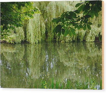 Willows Reflected Wood Print