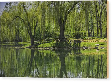 Willows Weep Into Their Reflection  Wood Print