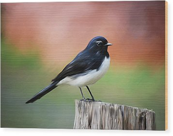 Willy Wagtail Austalian Bird Painting Wood Print