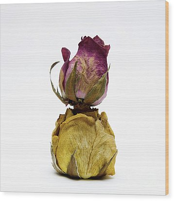 Wilted Rose Wood Print by Bernard Jaubert