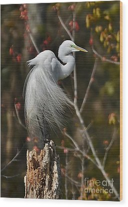 Wind In His Feathers Wood Print by Kathy Baccari