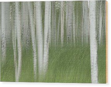 Wind In The Aspen Wood Print by Nancy Myer